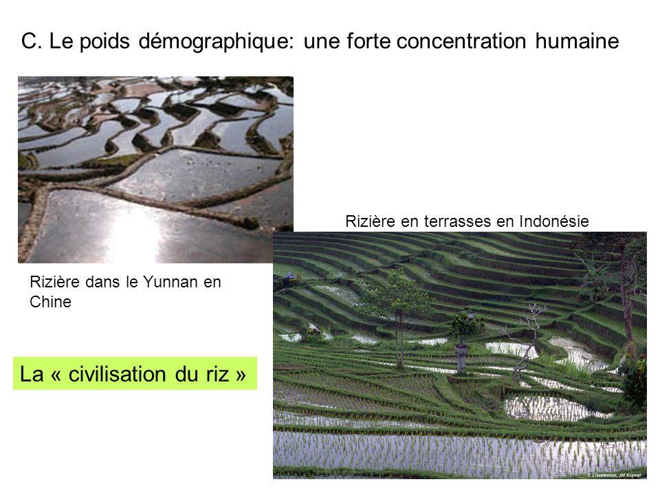 C. Le poids démographique: une forte concentration humaine Rizière dans le Yunnan en Chine Rizière en terrasses en Indonésie La « civilisation du riz
