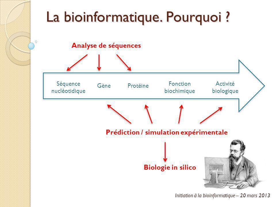 Initiation à la bioinformatique – 20 mars 2013 La bioinformatique. Pourquoi ? Séquence nucléotidique GèneProtéine Fonction biochimique Activité biolog