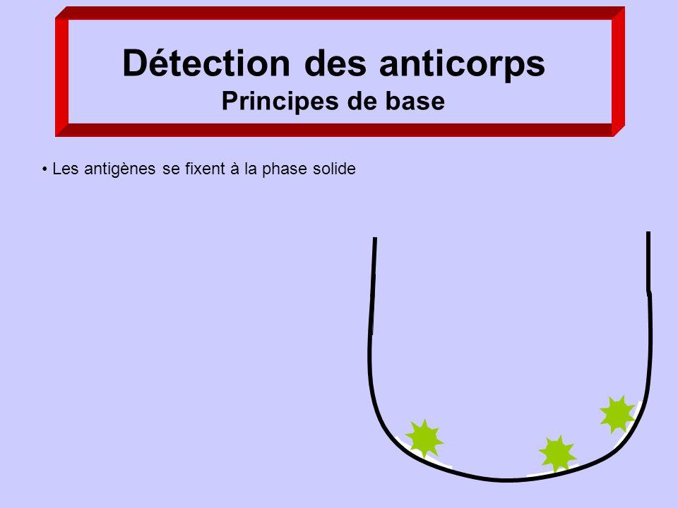 Détection des anticorps Principes de base Les antigènes se fixent à la phase solide