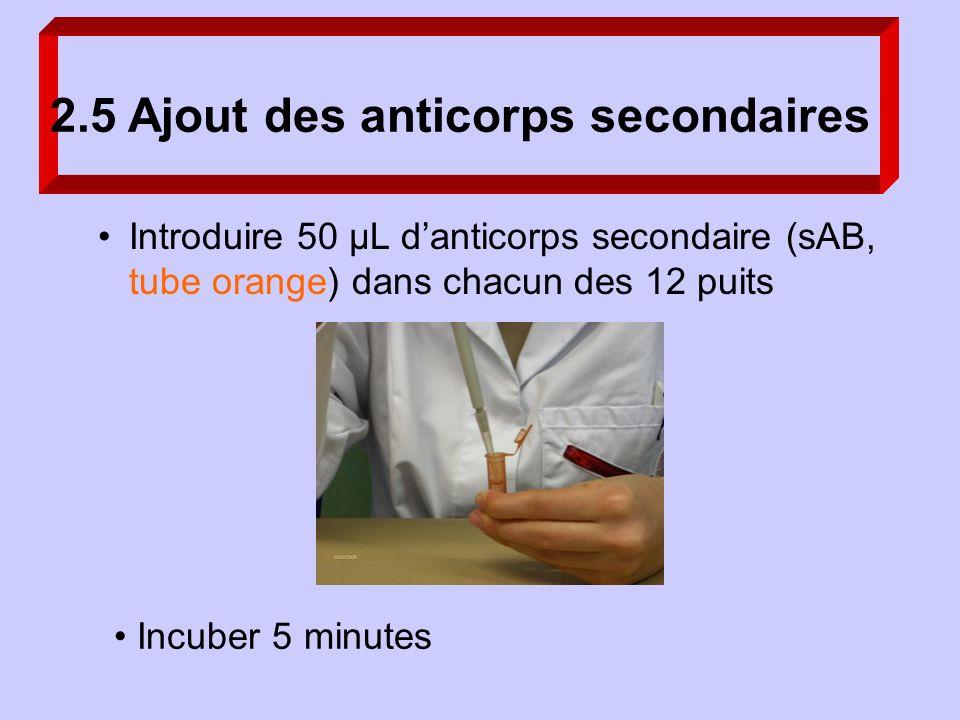2.5 Ajout des anticorps secondaires Incuber 5 minutes Introduire 50 µL danticorps secondaire (sAB, tube orange) dans chacun des 12 puits