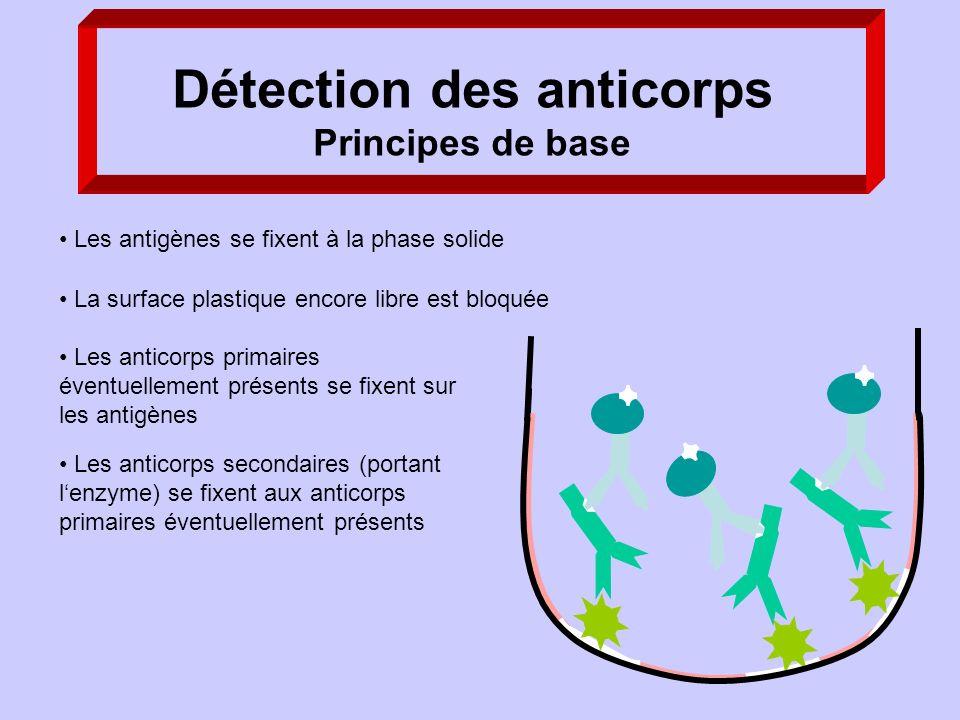 Les anticorps secondaires (portant lenzyme) se fixent aux anticorps primaires éventuellement présents Détection des anticorps Principes de base Les an