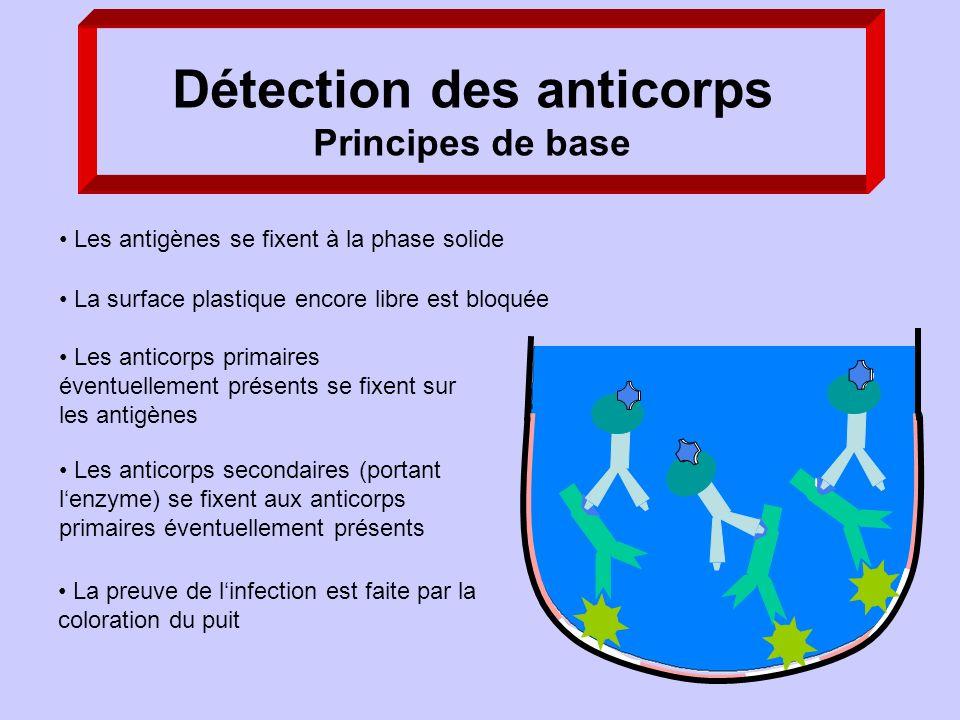 La preuve de linfection est faite par la coloration du puit Les anticorps secondaires (portant lenzyme) se fixent aux anticorps primaires éventuelleme