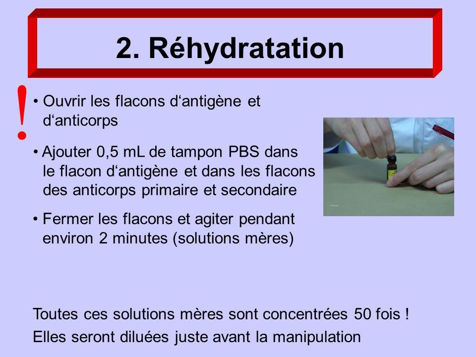 2. Réhydratation Ajouter 0,5 mL de tampon PBS dans le flacon dantigène et dans les flacons des anticorps primaire et secondaire Toutes ces solutions m