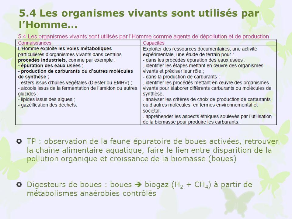 5.4 Les organismes vivants sont utilisés par lHomme… TP : observation de la faune épuratoire de boues activées, retrouver la chaîne alimentaire aquati