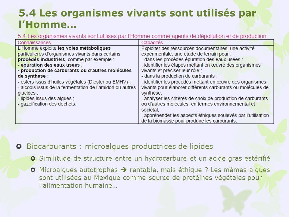 5.4 Les organismes vivants sont utilisés par lHomme… Biocarburants : microalgues productrices de lipides Similitude de structure entre un hydrocarbure