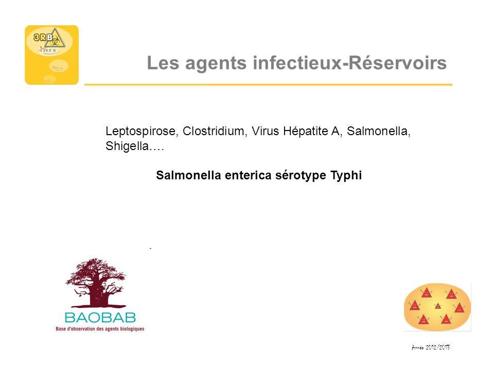 Les agents infectieux-Réservoirs Leptospirose, Clostridium, Virus Hépatite A, Salmonella, Shigella…. Salmonella enterica sérotype Typhi Année 2012/201