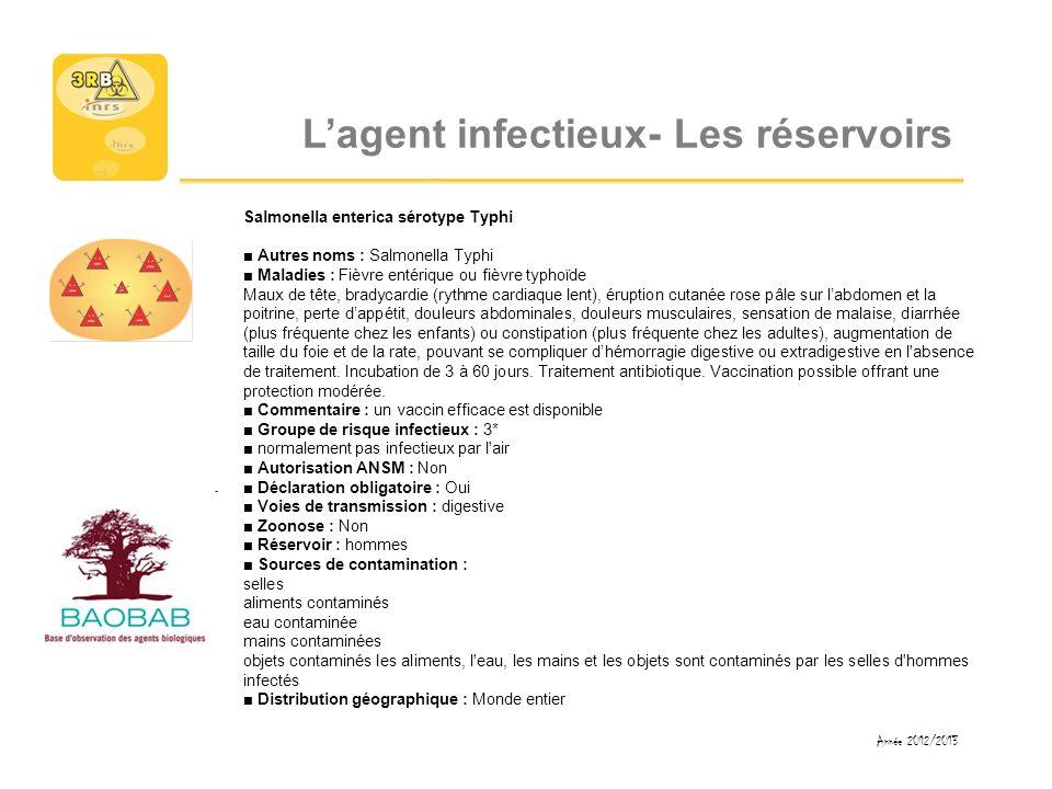 Lagent infectieux- Les réservoirs Salmonella enterica sérotype Typhi Autres noms : Salmonella Typhi Maladies : Fièvre entérique ou fièvre typhoïde Mau