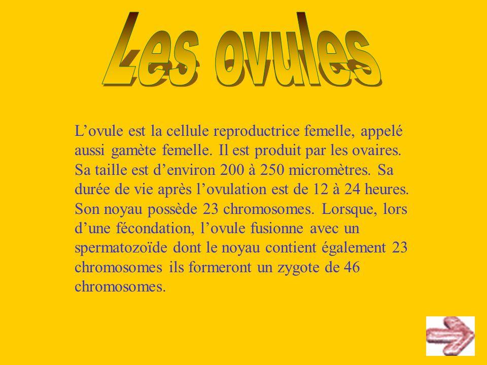Lovule est la cellule reproductrice femelle, appelé aussi gamète femelle. Il est produit par les ovaires. Sa taille est denviron 200 à 250 micromètres