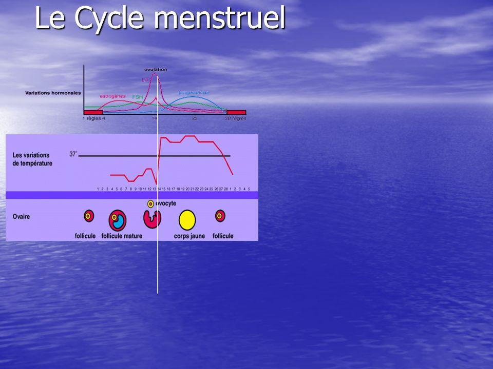 Le Cycle menstruel