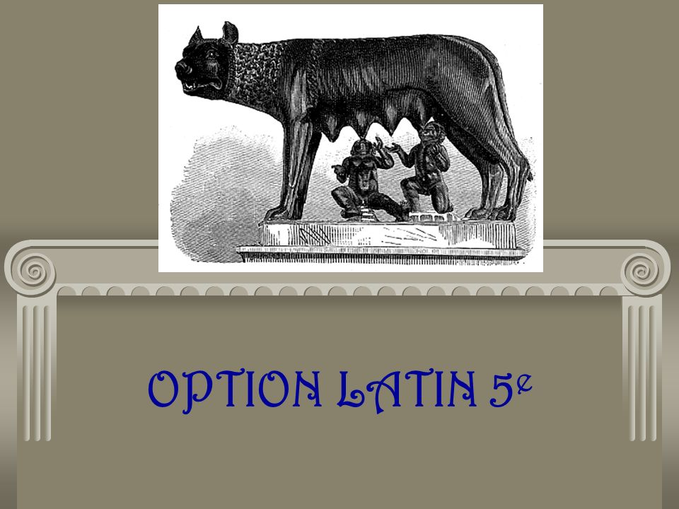 OPTION LATIN 5 e
