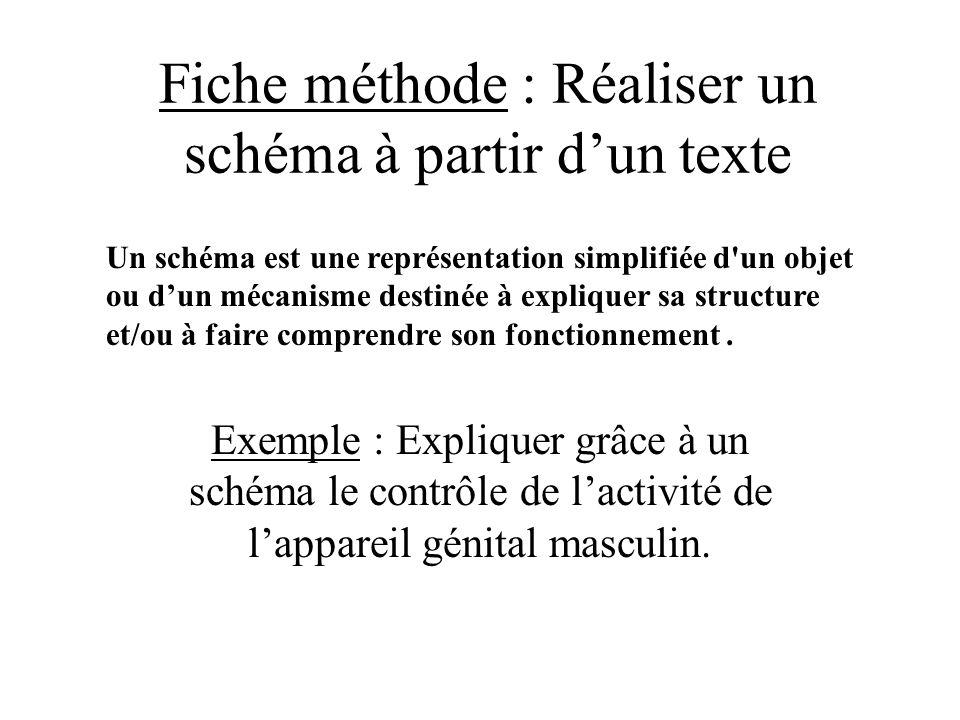 Fiche méthode : Réaliser un schéma à partir dun texte Exemple : Expliquer grâce à un schéma le contrôle de lactivité de lappareil génital masculin. Un