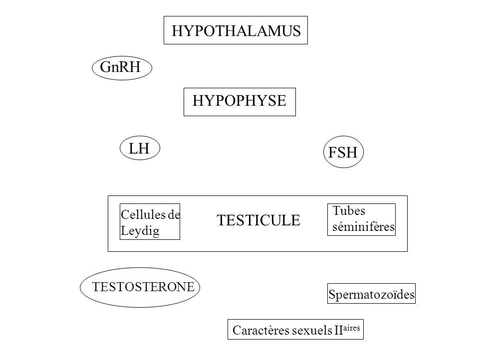 HYPOTHALAMUS HYPOPHYSE Cellules de Leydig TESTICULE Tubes séminifères GnRH LH FSH TESTOSTERONE Spermatozoïdes Caractères sexuels II aires