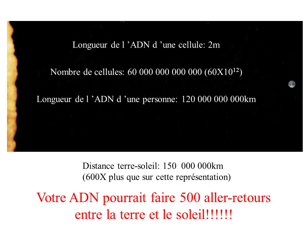 Longueur de l ADN d une cellule: 2m Nombre de cellules: 60 000 000 000 000 (60X10 12 ) Longueur de l ADN d une personne: 120 000 000 000km Distance te