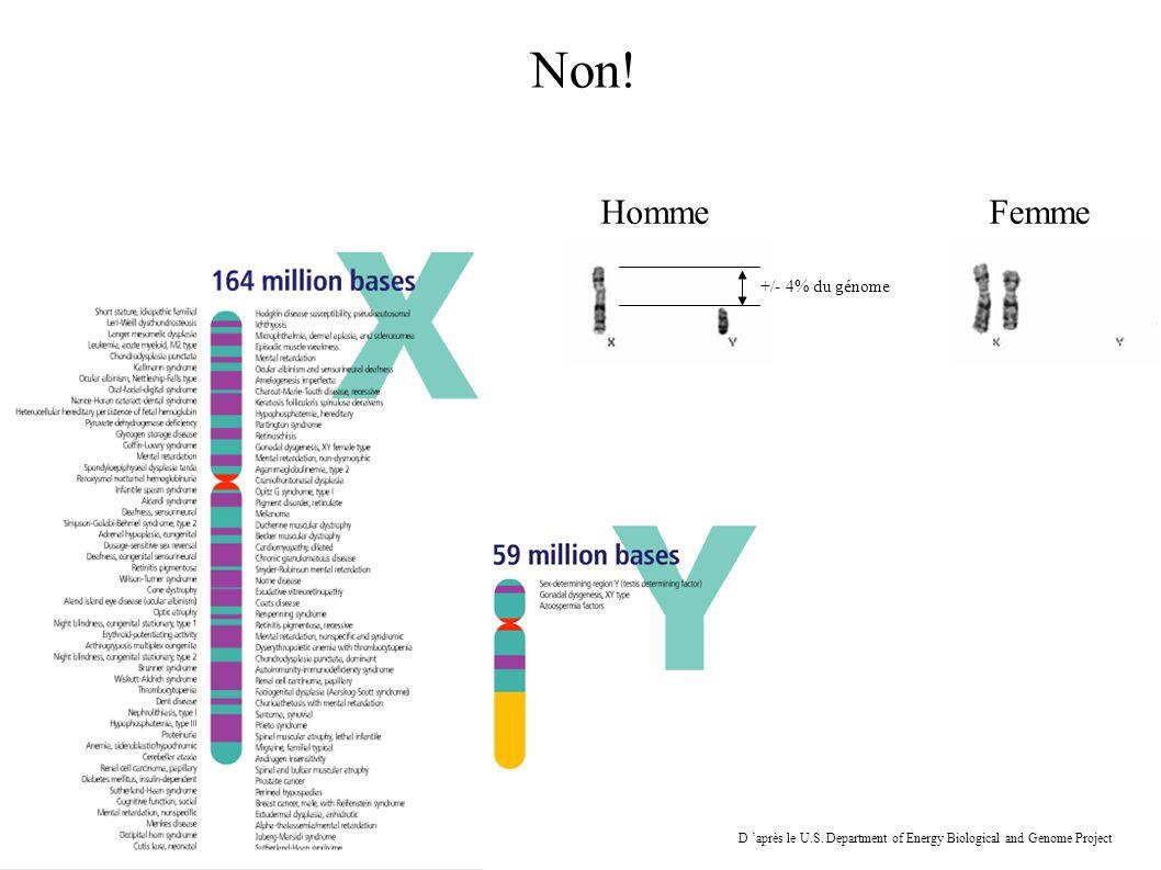 HommeFemme Non! +/- 4% du génome D après le U.S. Department of Energy Biological and Genome Project