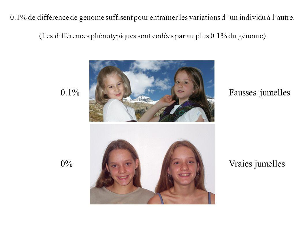 0.1% de différence de genome suffisent pour entraîner les variations d un individu à lautre. (Les différences phénotypiques sont codées par au plus 0.