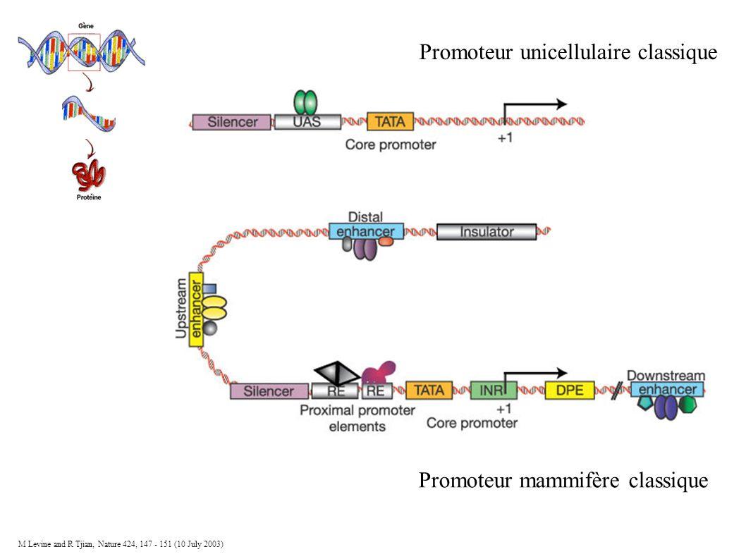 Promoteur mammifère classique Promoteur unicellulaire classique M Levine and R Tjian, Nature 424, 147 - 151 (10 July 2003)