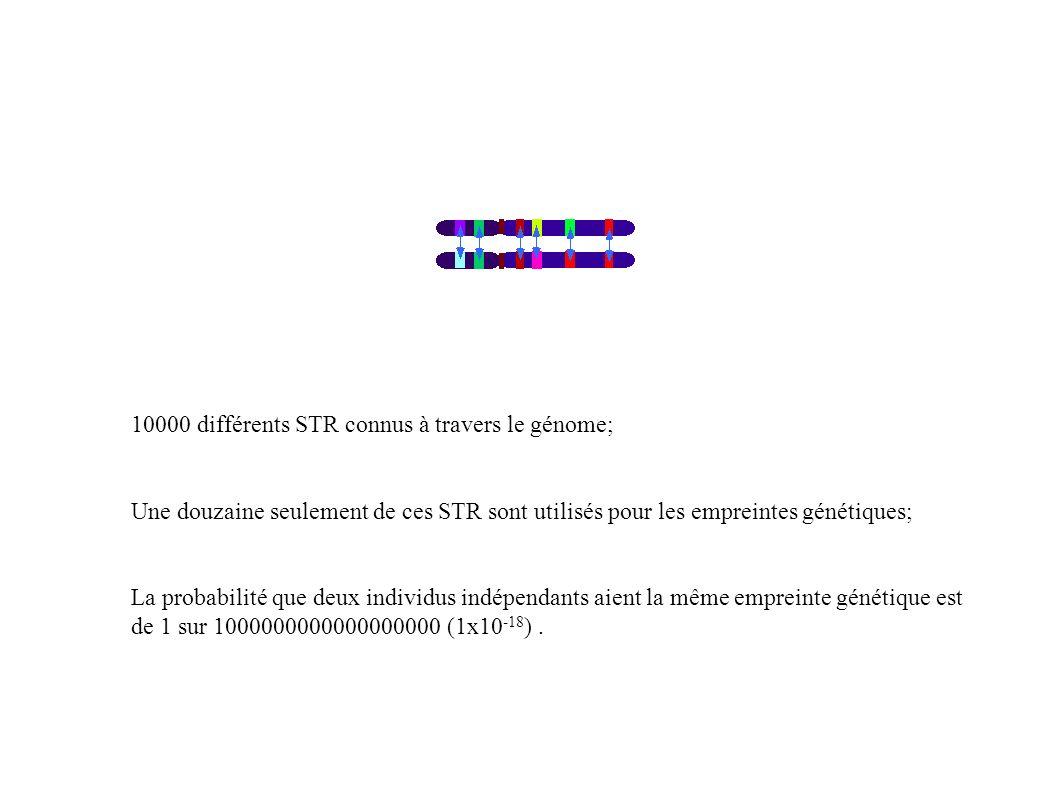 10000 différents STR connus à travers le génome; Une douzaine seulement de ces STR sont utilisés pour les empreintes génétiques; La probabilité que de
