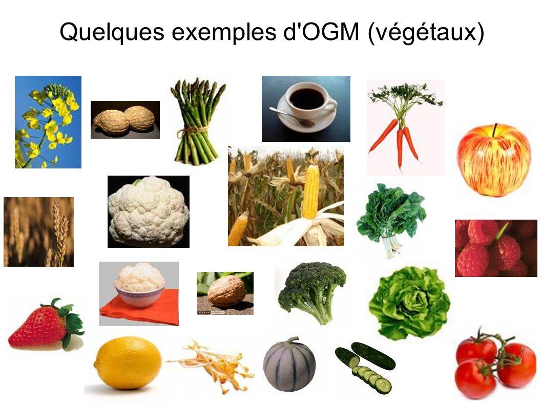 Quelques exemples d'OGM (végétaux)