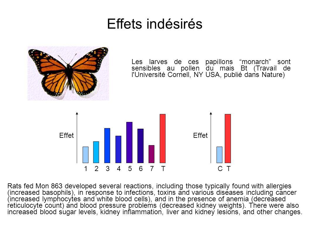 Les larves de ces papillons monarch sont sensibles au pollen du mais Bt (Travail de l'Université Cornell, NY USA, publié dans Nature) Effets indésirés