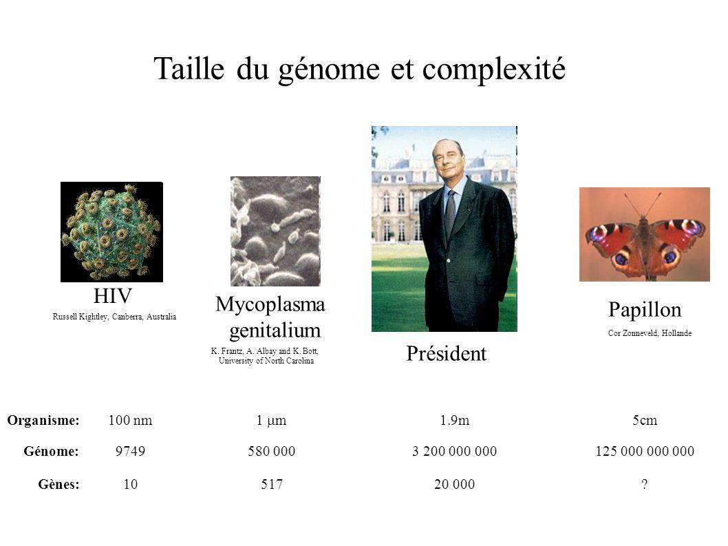 Papillon Cor Zonneveld, Hollande 125 000 000 000 ? 5cm 3 200 000 000 Président 20 000 1.9m Mycoplasma genitalium K. Frantz, A. Albay and K. Bott, Univ
