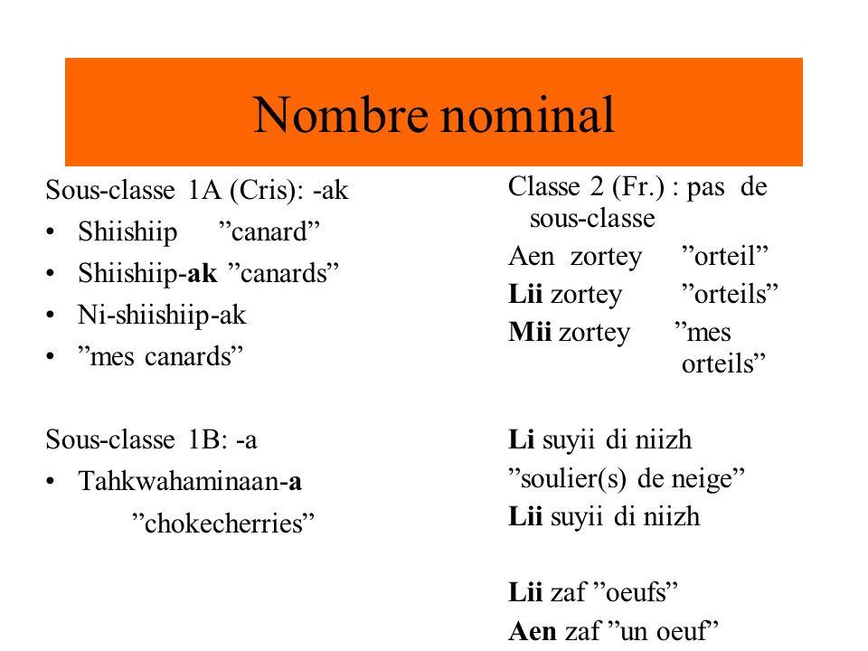Nombre nominal Classe 2 (Fr.) : pas de sous-classe Aen zortey orteil Lii zortey orteils Mii zortey mes orteils Li suyii di niizh soulier(s) de neige L