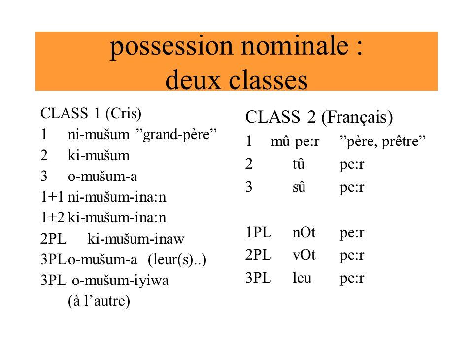 possession nominale : deux classes CLASS 1 (Cris) 1ni-mušum grand-père 2ki-mušum 3o-mušum-a 1+1ni-mušum-ina:n 1+2ki-mušum-ina:n 2PL ki-mušum-inaw 3PLo