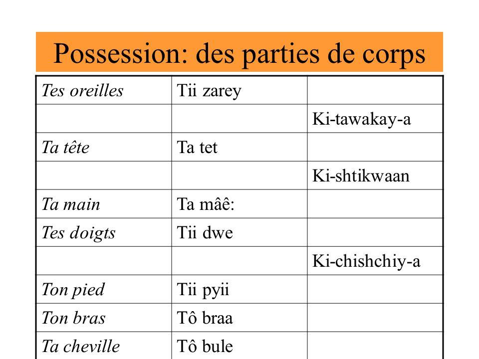 Possession: des parties de corps Tes oreillesTii zarey Ki-tawakay-a Ta têteTa tet Ki-shtikwaan Ta mainTa mâê: Tes doigtsTii dwe Ki-chishchiy-a Ton pie