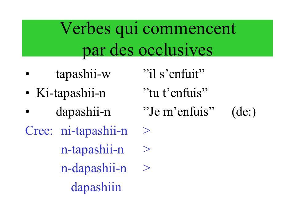 Verbes qui commencent par des occlusives tapashii-wil senfuit Ki-tapashii-ntu tenfuis dapashii-nJe menfuis(de:) Cree: ni-tapashii-n> n-tapashii-n> n-d