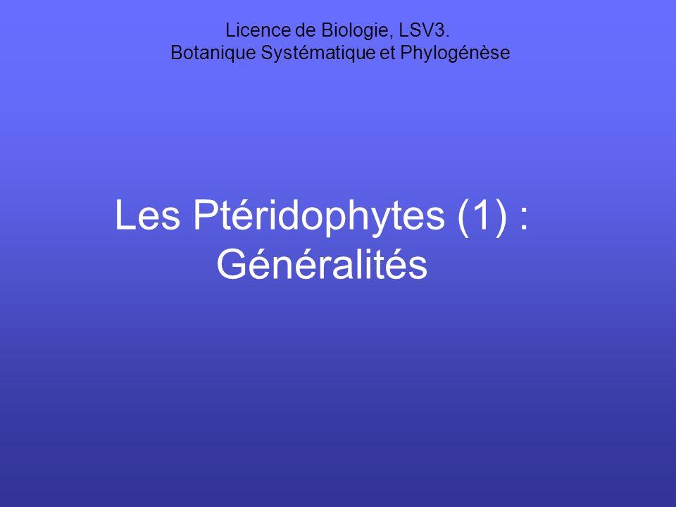 Les Ptéridophytes (1) : Généralités Licence de Biologie, LSV3. Botanique Systématique et Phylogénèse