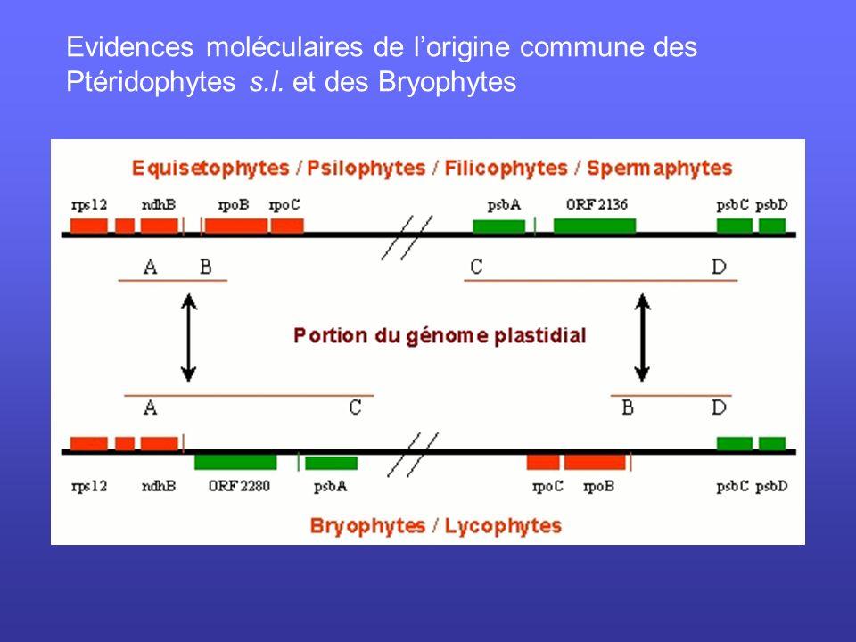Evidences moléculaires de lorigine commune des Ptéridophytes s.l. et des Bryophytes