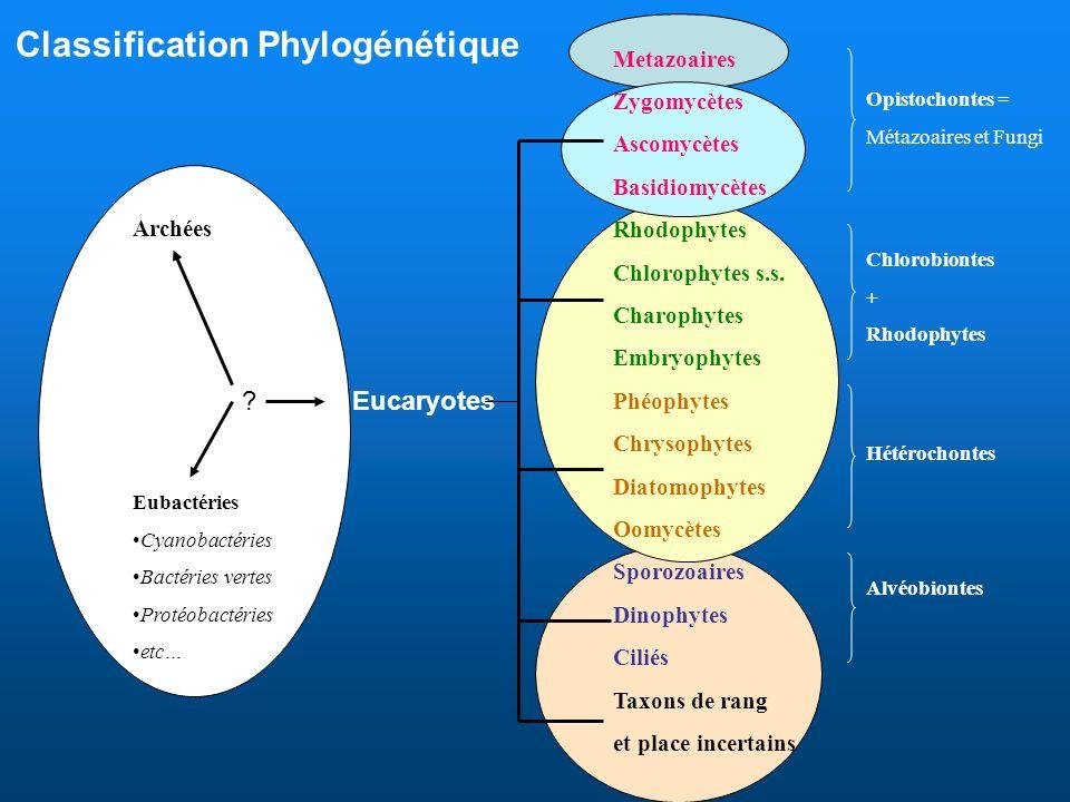 Classification Phylogénétique Archées Eubactéries Cyanobactéries Bactéries vertes Protéobactéries etc… Eucaryotes Metazoaires Zygomycètes Ascomycètes