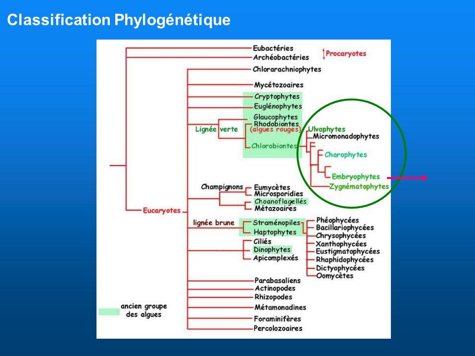 Synapomorphies des trachéophytes Embryophytes