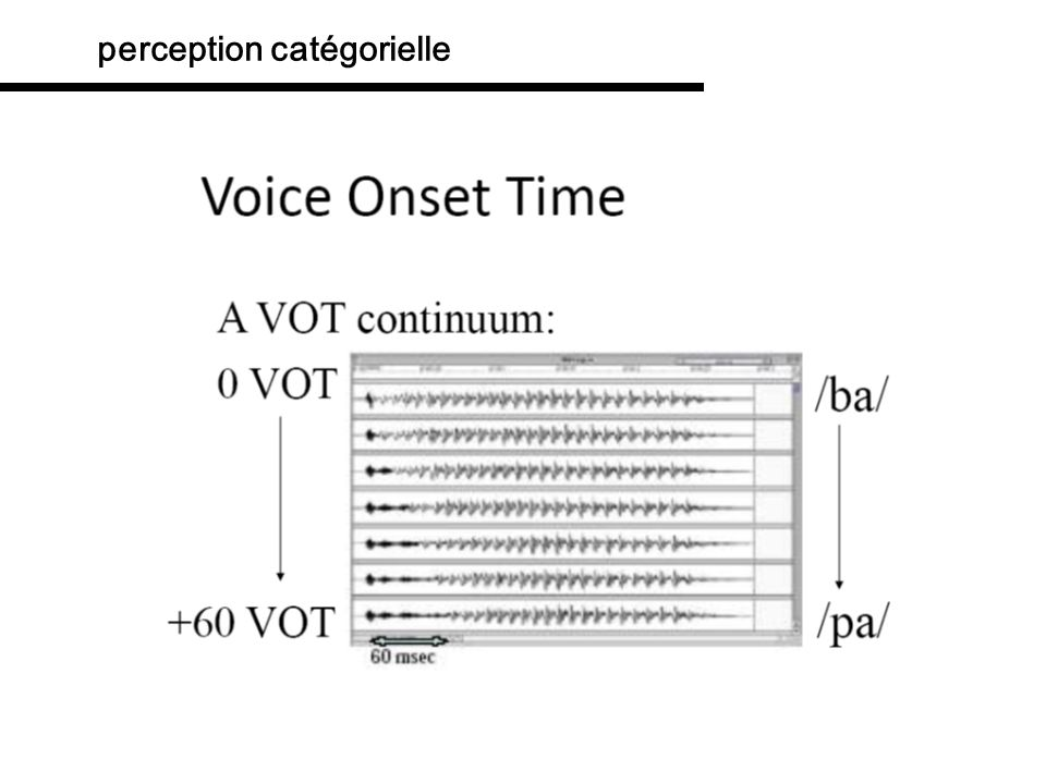 perception catégorielle VOT Voice Onset Timing