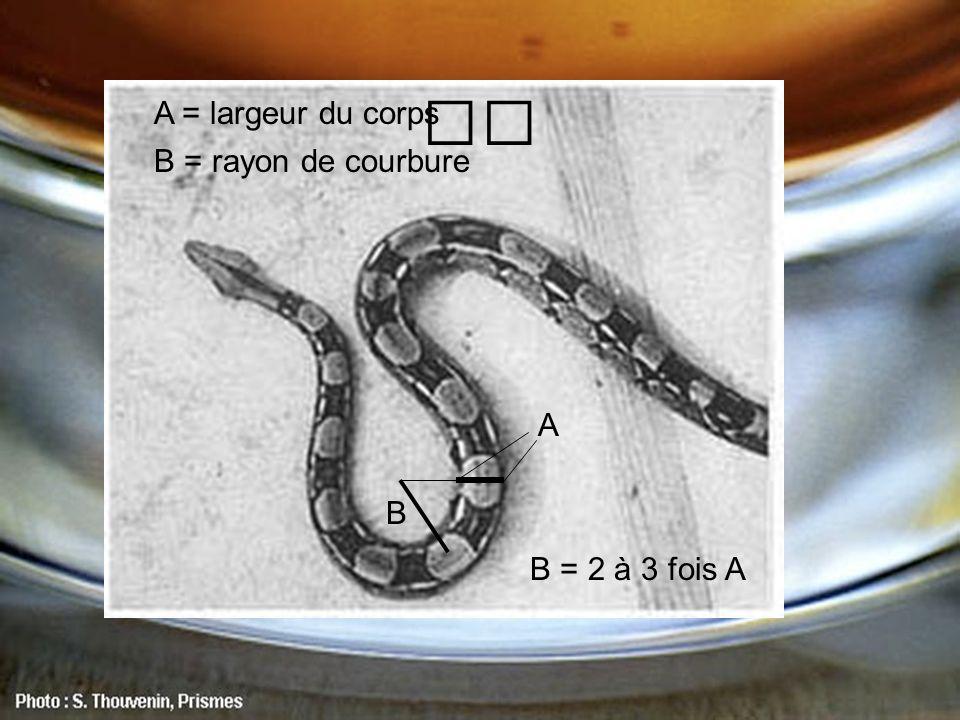 A B B = 2 à 3 fois A B = rayon de courbure A = largeur du corps