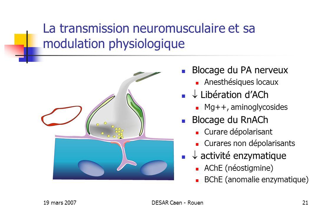 19 mars 2007DESAR Caen - Rouen21 La transmission neuromusculaire et sa modulation physiologique Blocage du PA nerveux Anesthésiques locaux Libération