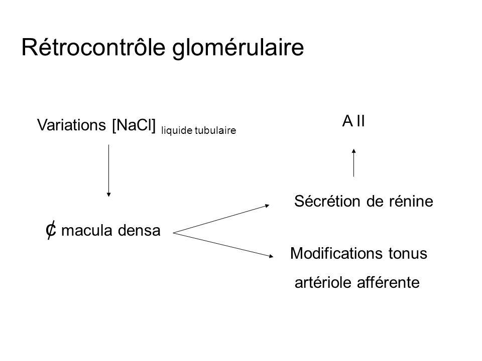 Rétrocontrôle glomérulaire Variations [NaCl] liquide tubulaire ¢ macula densa Modifications tonus artériole afférente Sécrétion de rénine A II