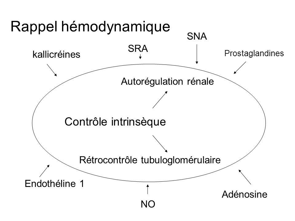Rappel hémodynamique Contrôle intrinsèque Autorégulation rénale Rétrocontrôle tubuloglomérulaire Prostaglandines kallicréines Endothéline 1 Adénosine