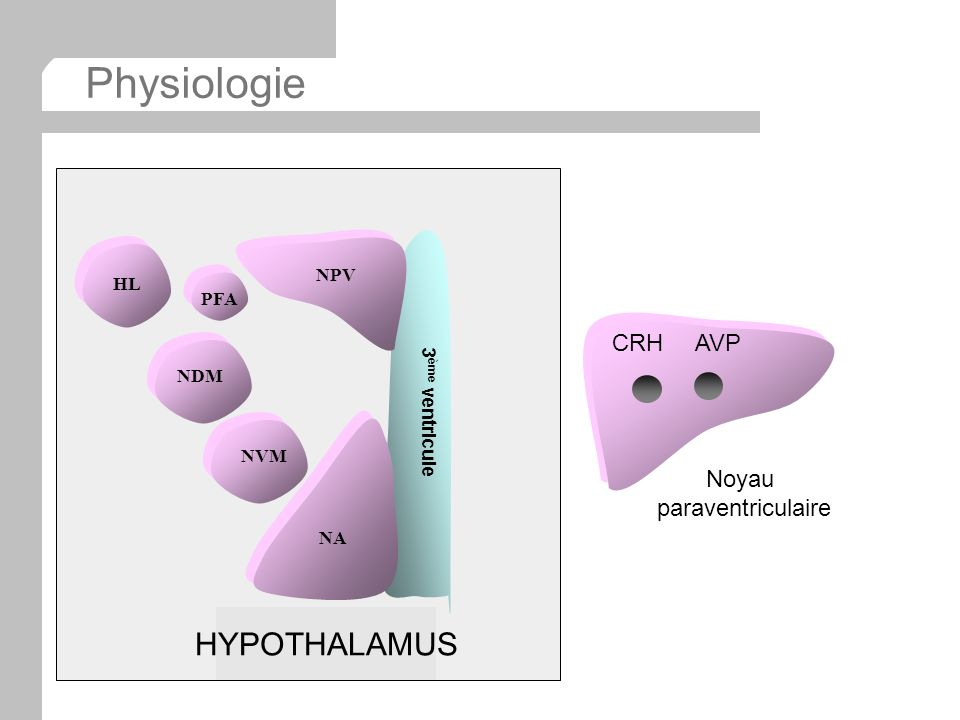 Physiologie HL NPV NA NDM NVM 3 ème ventricule PFA HYPOTHALAMUS CRH AVP Noyau paraventriculaire