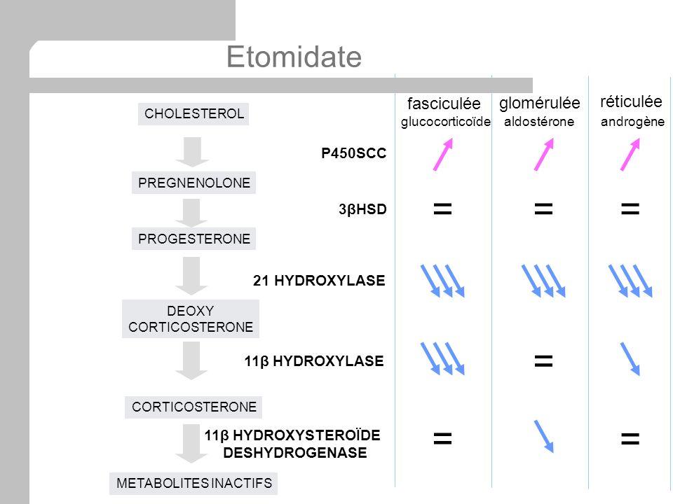 CHOLESTEROL PROGESTERONE DEOXY CORTICOSTERONE PREGNENOLONE P450SCC 3βHSD 21 HYDROXYLASE 11β HYDROXYLASE METABOLITES INACTIFS 11β HYDROXYSTEROÏDE DESHY