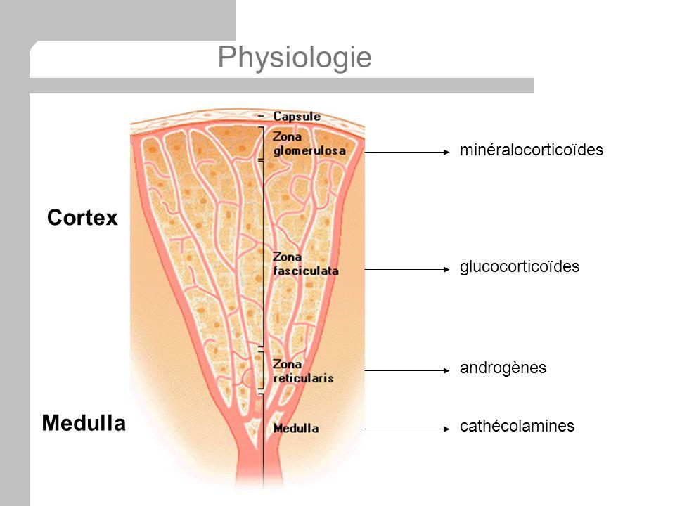 Physiologie minéralocorticoïdes glucocorticoïdes androgènes cathécolamines Cortex Medulla