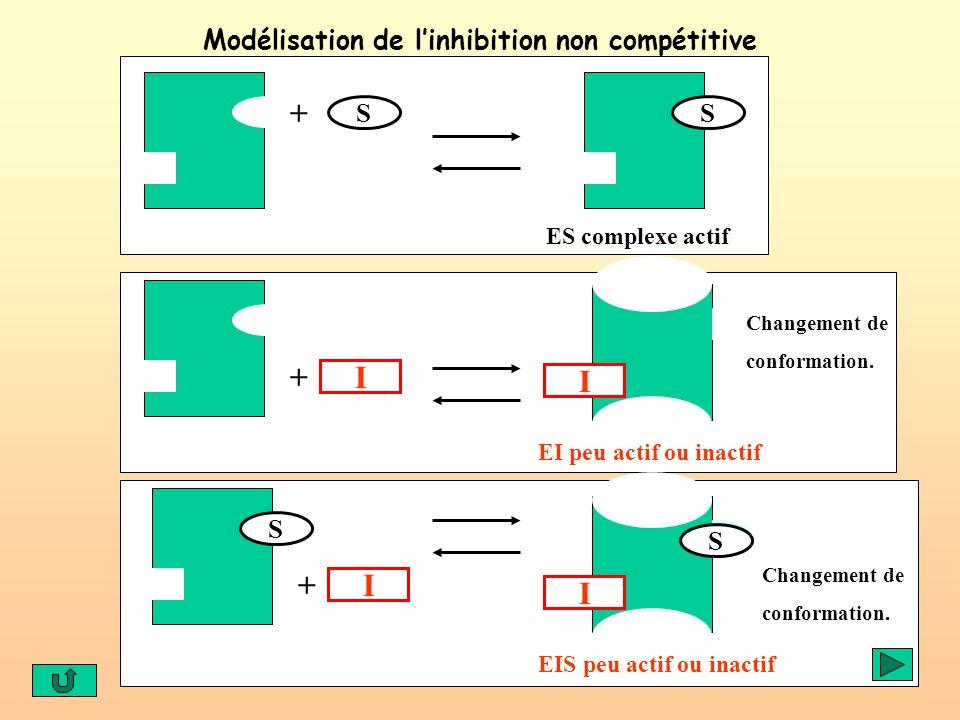 Modélisation de linhibition non compétitive S ES complexe actif S + I + I + S I EI peu actif ou inactif Changement de conformation. I S EIS peu actif