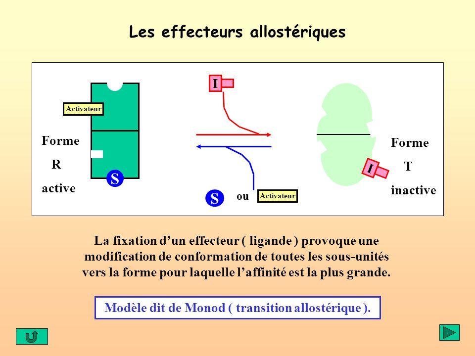 Les effecteurs allostériques S Activateur S ou Activateur Forme R active Forme T inactive I I La fixation dun effecteur ( ligande ) provoque une modif