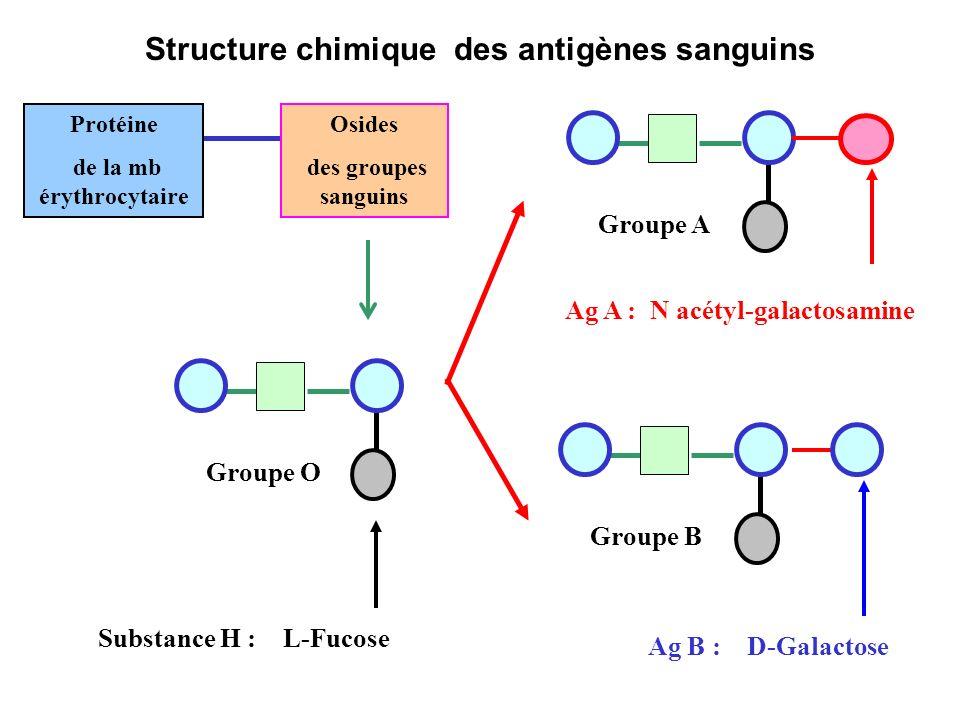 Structure chimique des antigènes sanguins Protéine de la mb érythrocytaire Osides des groupes sanguins Substance H : L-Fucose Ag B : D-Galactose Ag A : N acétyl-galactosamine Groupe BGroupe AGroupe O