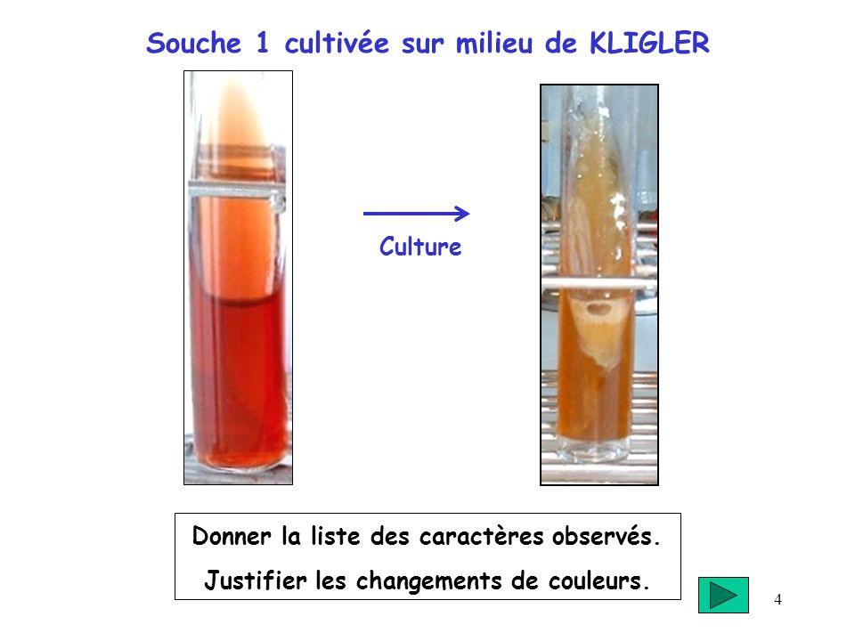 4 Souche 1 cultivée sur milieu de KLIGLER Donner la liste des caractères observés. Justifier les changements de couleurs. Culture