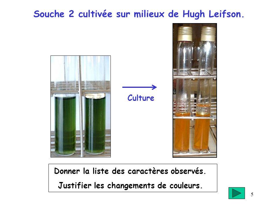 5 Souche 2 cultivée sur milieux de Hugh Leifson. Donner la liste des caractères observés. Justifier les changements de couleurs. Culture