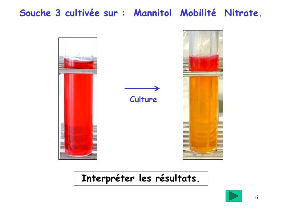 6 Souche 3 cultivée sur : Mannitol Mobilité Nitrate. Interpréter les résultats. Culture