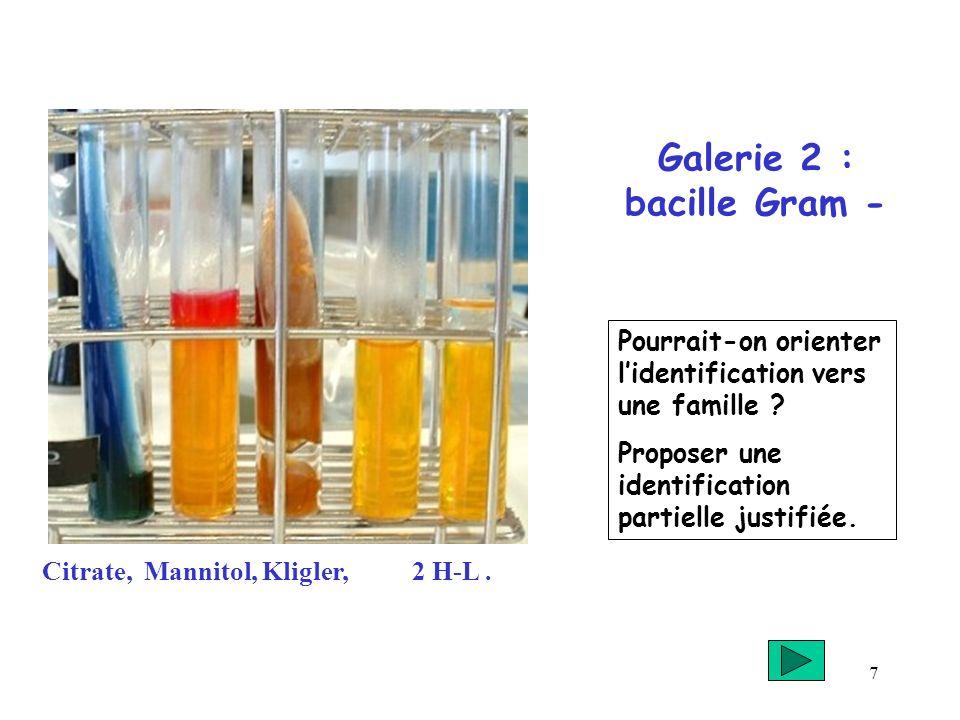 7 Galerie 2 : bacille Gram - Citrate, Mannitol, Kligler, 2 H-L. Pourrait-on orienter lidentification vers une famille ? Proposer une identification pa
