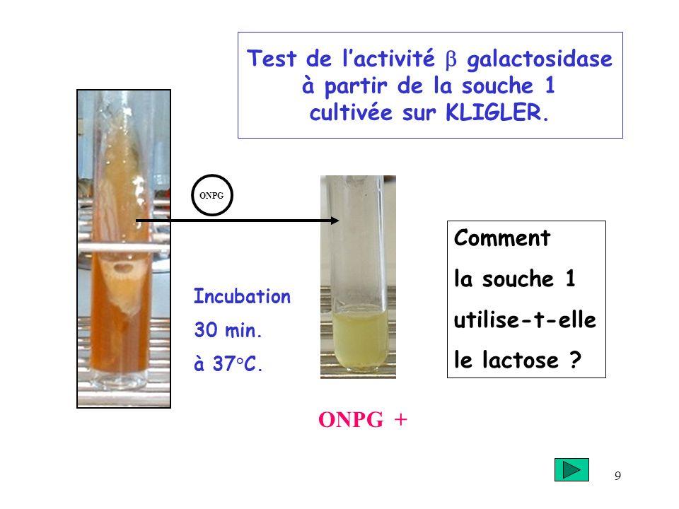 9 Test de lactivité galactosidase à partir de la souche 1 cultivée sur KLIGLER. Comment la souche 1 utilise-t-elle le lactose ? ONPG + Incubation 30 m