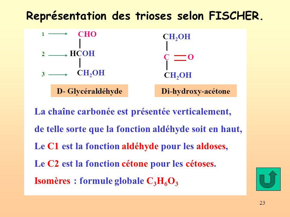 23 Représentation des trioses selon FISCHER. Di-hydroxy-acétone CH 2 OH C O CH 2 OH CHO HCOH CH 2 OH D- Glycéraldéhyde 123123 La chaîne carbonée est p