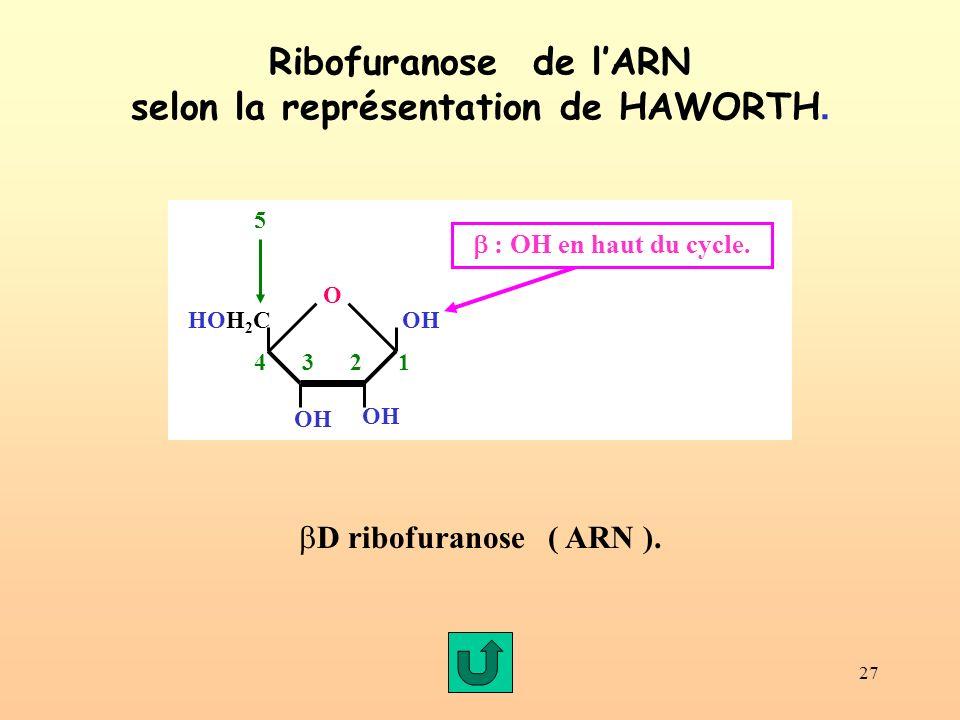 27 Ribofuranose de lARN selon la représentation de HAWORTH.